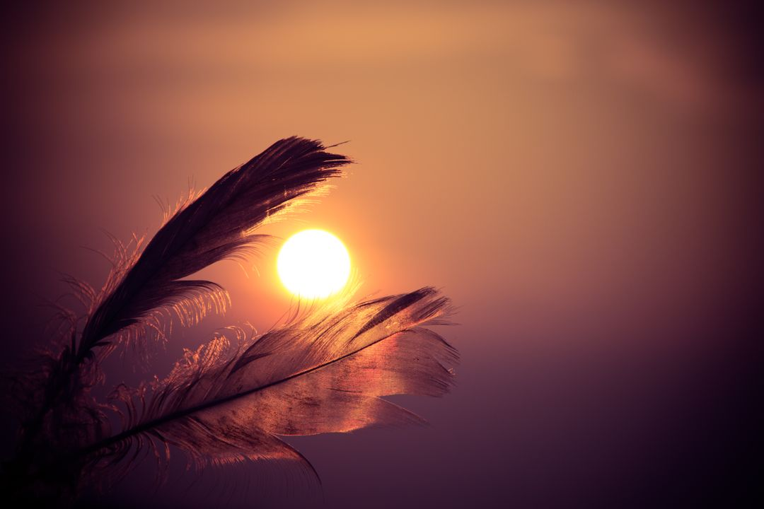 Sunset feathers sun sky