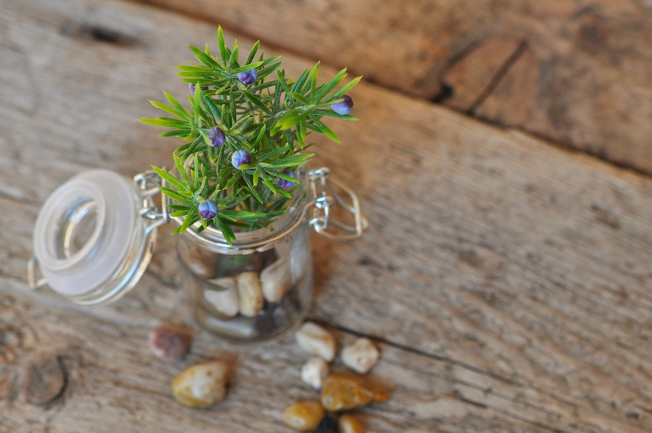 FREE herb Stock Photos from PikWizard