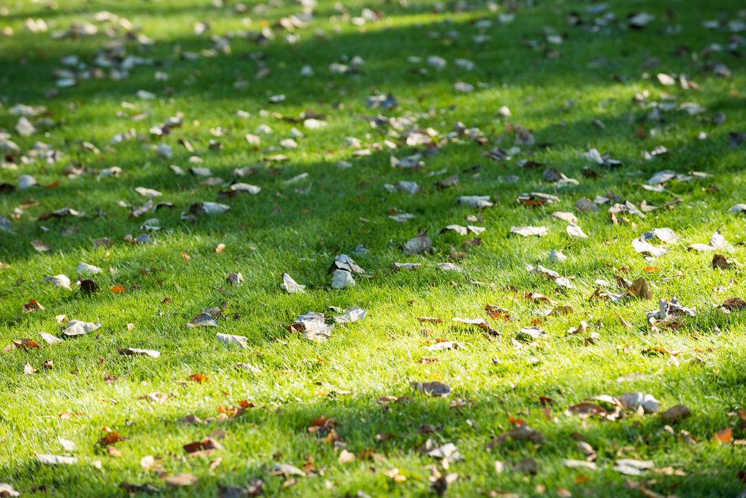 Dried leaves fallen in the grass on a sunny day Free Stock Images from PikWizard