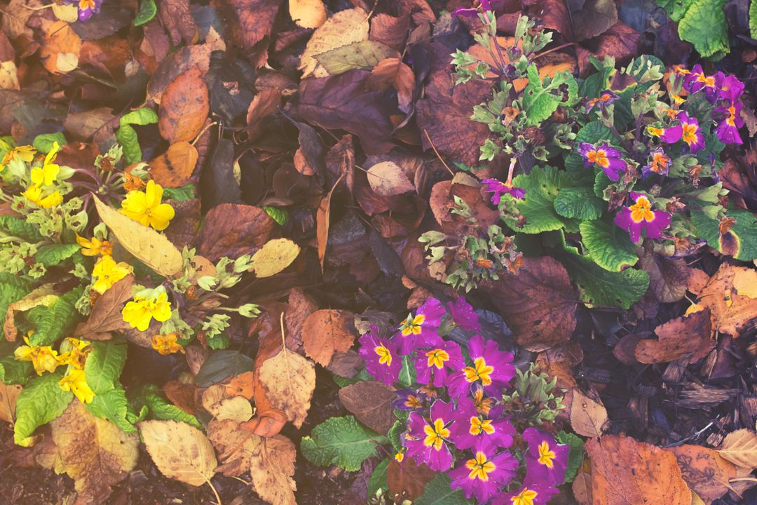 Autumn autumn colours flowers garden