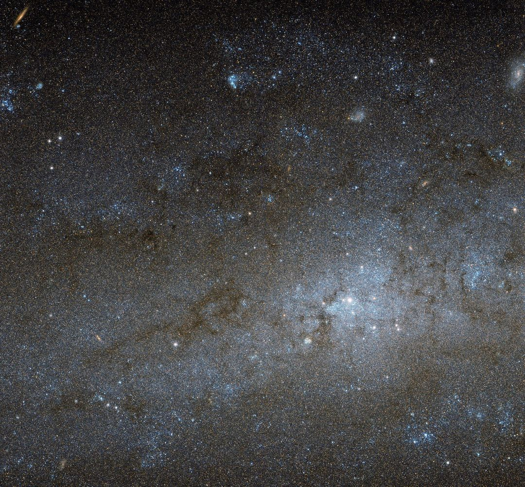 This Hubble image shows the central region of a spiral galaxy known as NGC 247. NGC 247 is a relatively small spiral galaxy in the southern constellation of Cetus (The Whale). Lying at a distance of around 11 million light-years from us, it forms part of the Sculptor Group, a loose collection of galaxies that also contains the more famous NGC 253 (otherwise known as the Sculptor Galaxy). NGC 247's nucleus is visible here as a bright, whitish patch, surrounded by a mixture of stars, gas and dust. The dust forms dark patches and filaments that are silhouetted against the background of stars, while the gas has formed into bright knots known as H II regions, mostly scattered throughout the galaxy's arms and outer areas. This galaxy displays one particularly unusual and mysterious feature — it is not visible in this image, but can be seen clearly in wider views of the galaxy, such as this picture from ESO's MPG/ESO 2.2-metre telescope. The northern part of NGC 247's disc hosts an apparent void, a gap in the usual swarm of stars and H II regions that spans almost a third of the galaxy's total length. There are stars within this void, but they are quite different from those around it. They are significantly older, and as a result much fainter and redder. This indicates that the star formation taking place across most of the galaxy's disc has somehow been arrested in the void region, and has not taken place for around one billion years. Although astronomers are still unsure how the void formed, recent studies suggest it might have been caused by gravitational interactions with part of another galaxy.