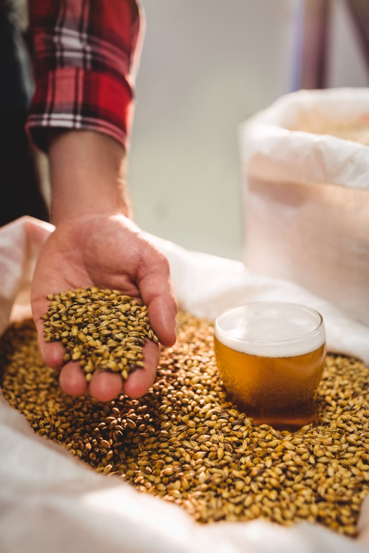 Cropped image of manufacturer holding barley by beer glass in sack at brewery Free Stock Images from PikWizard