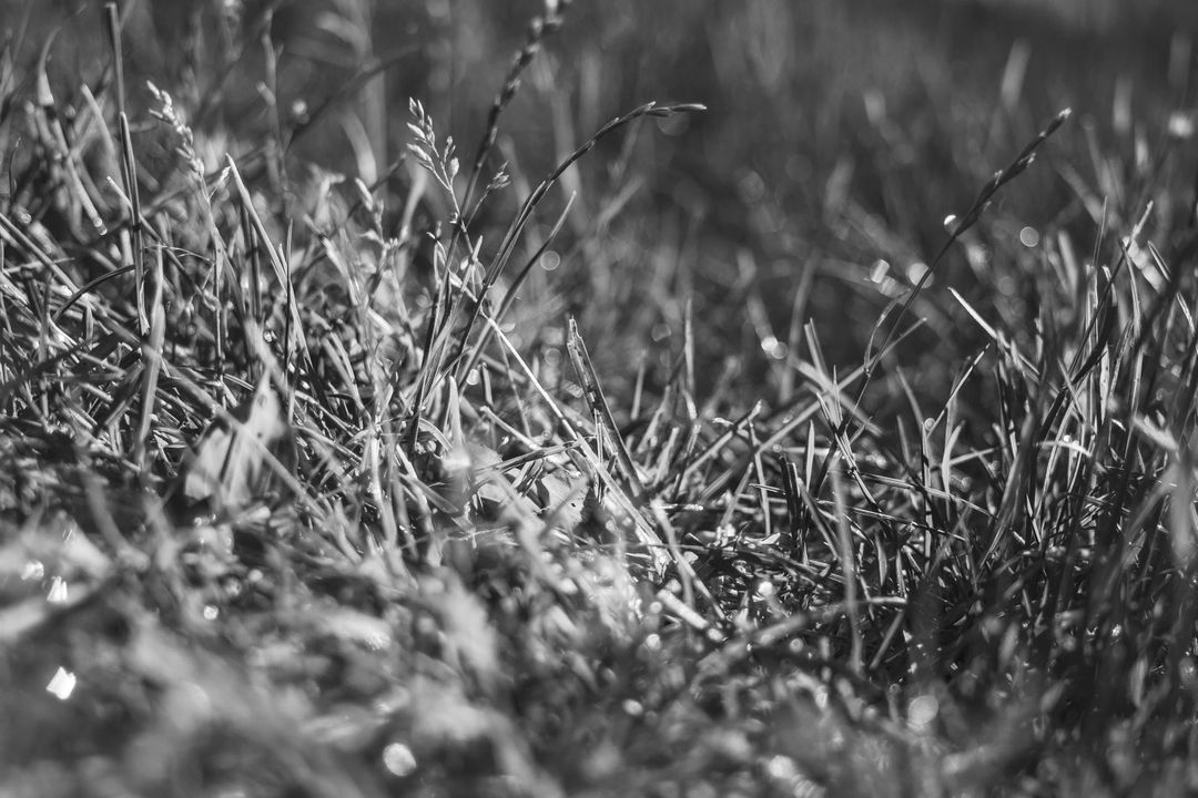 Black and white grass