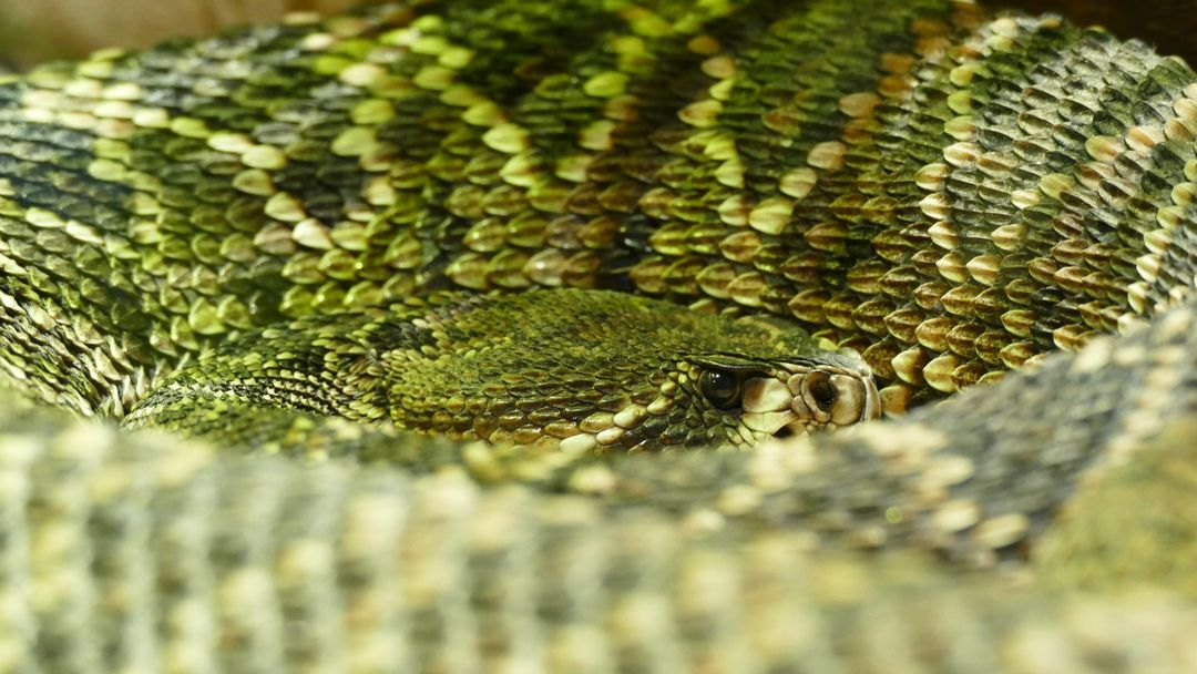 Reptile snake wildlife zoo