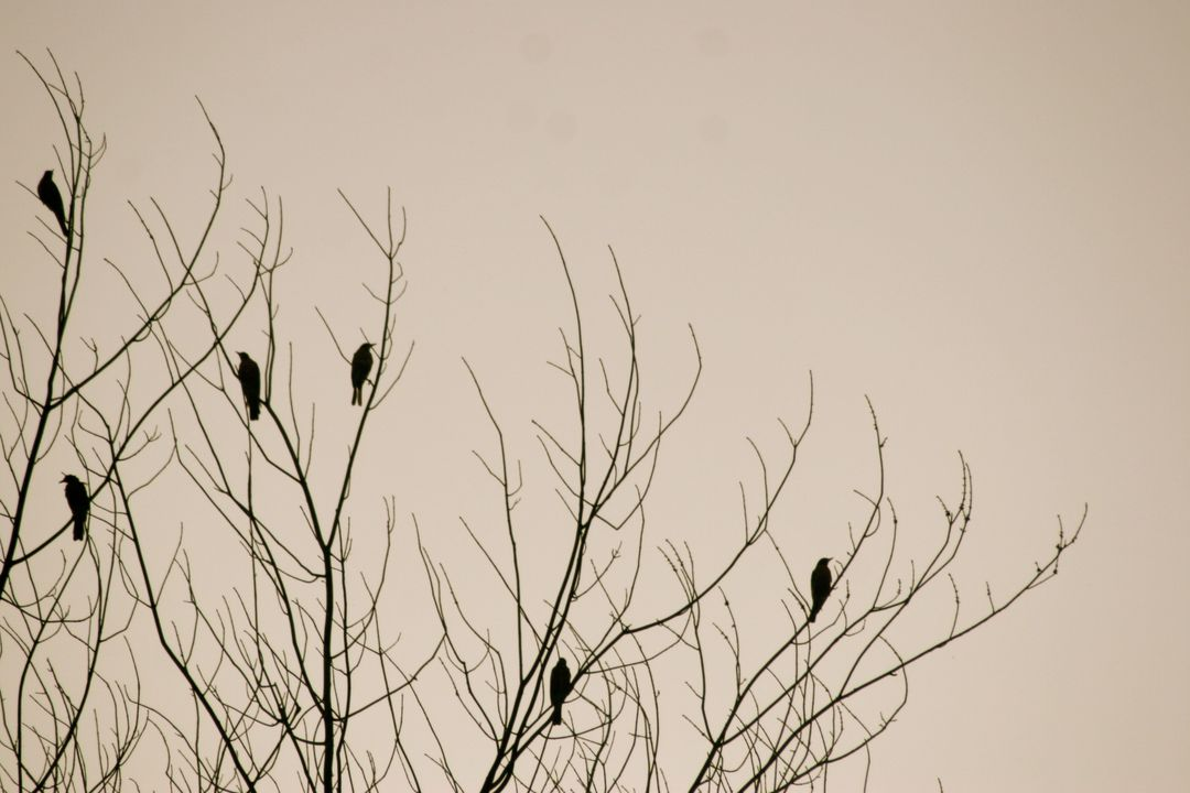 Birds tree nature