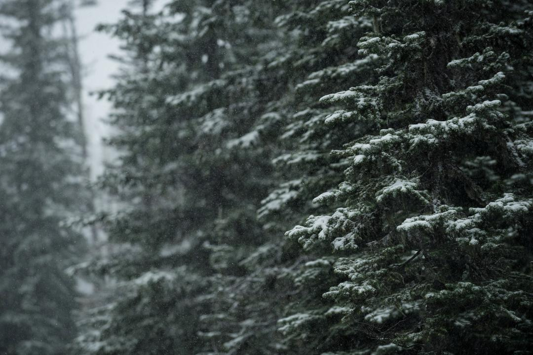 Close-up of trees covered with snow in winter Free Stock Images from PikWizard