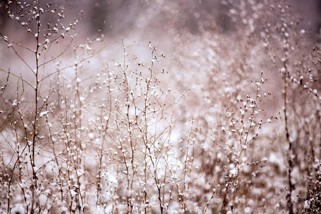 Branches Flowers Snow