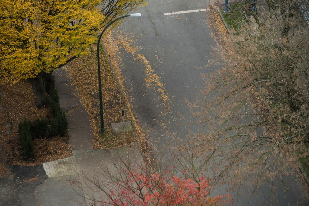 View of street during autumn