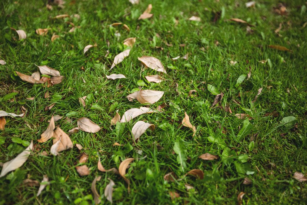 Dry leaves fallen on green grass, backgrounds