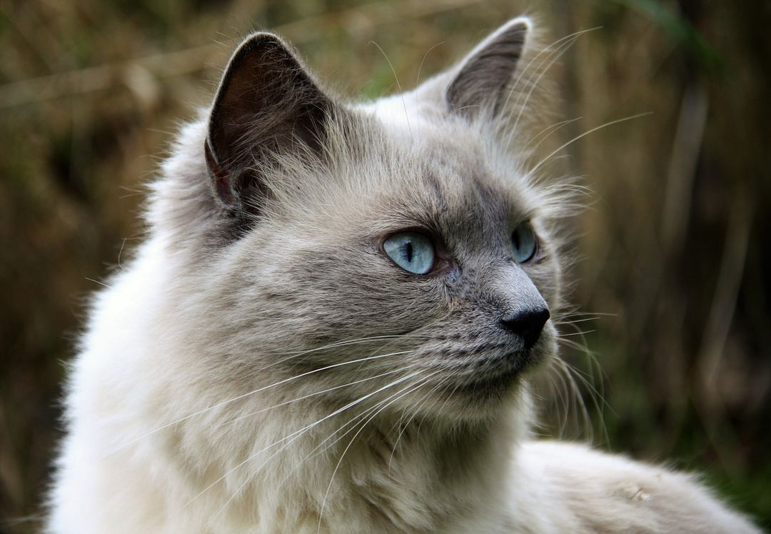 Animal animals cat cat eyes Free Stock Images from PikWizard