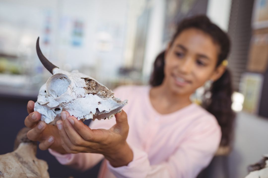 Elementary student examining animal skull at science laboratory Free Stock Images from PikWizard