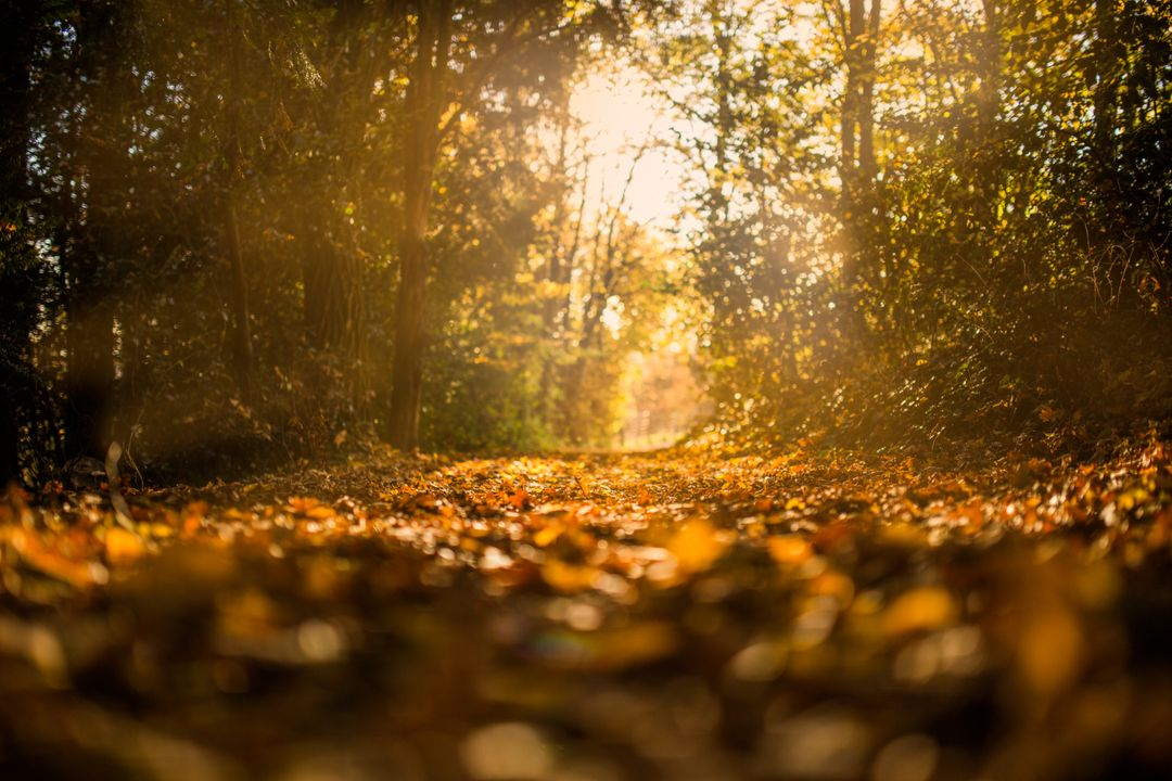 The Forest in Autumn Free Photo