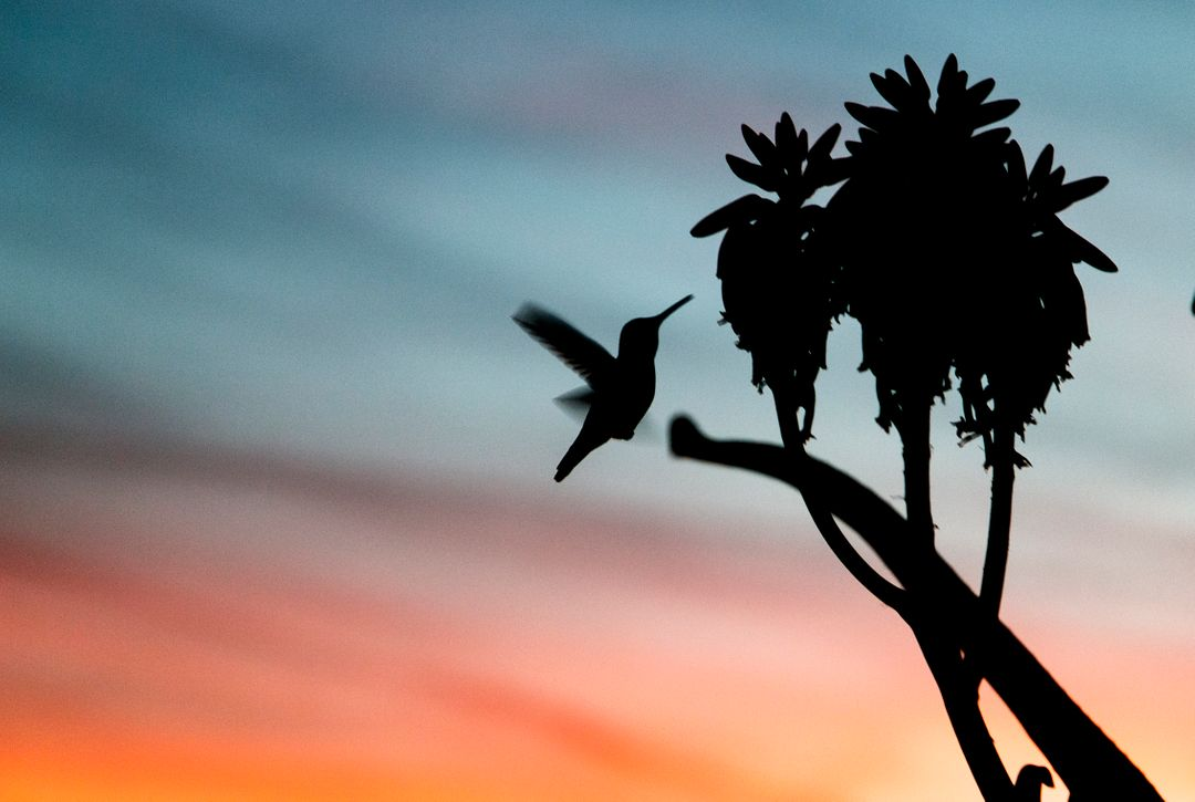 Close-up of Silhouette Bird Flying Against Sky