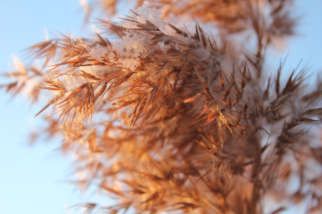 FREE wheat Stock Photos from PikWizard