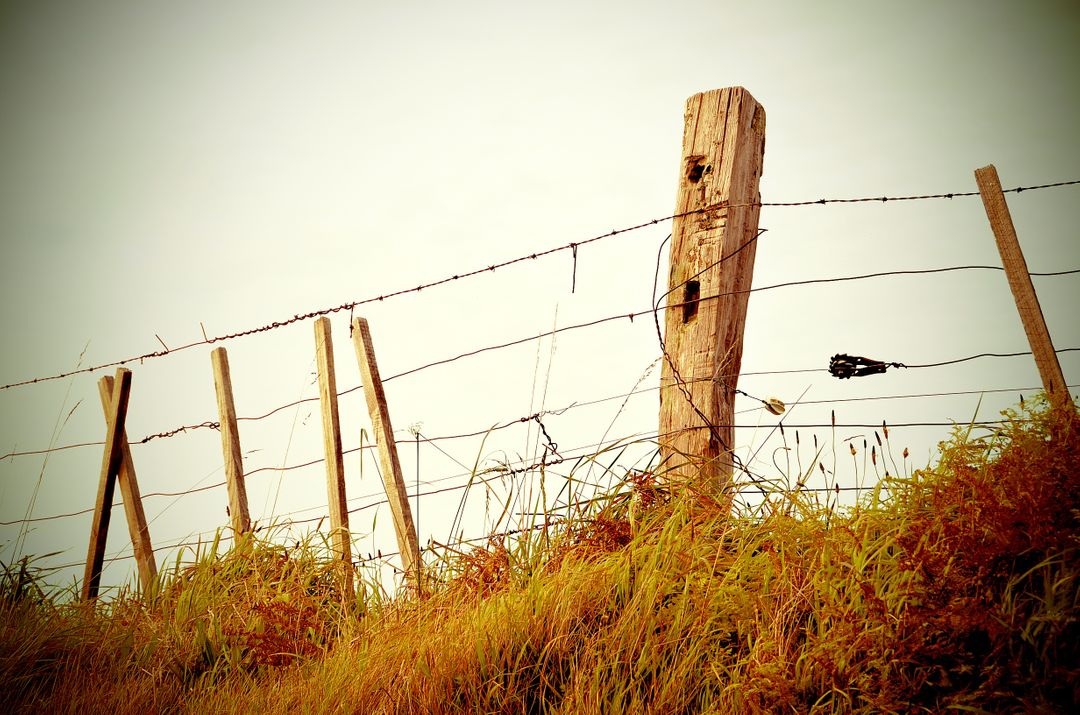 Wire fence wood