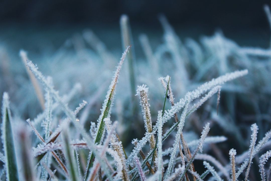 Cold frost frozen grass