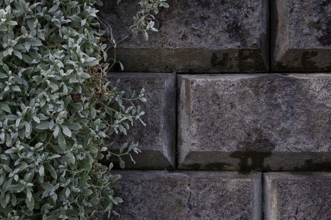 Grey grey concrete nature stone wall