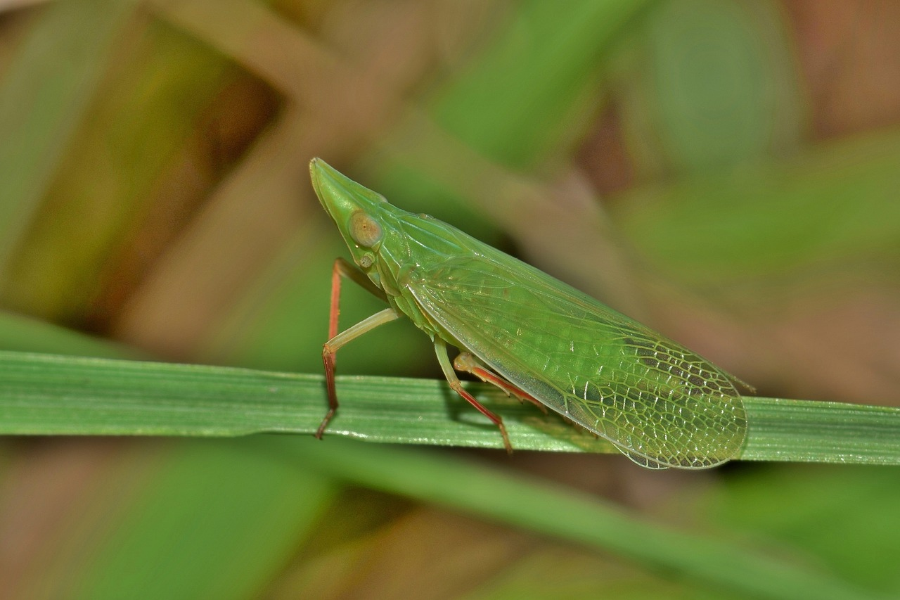 FREE insect image