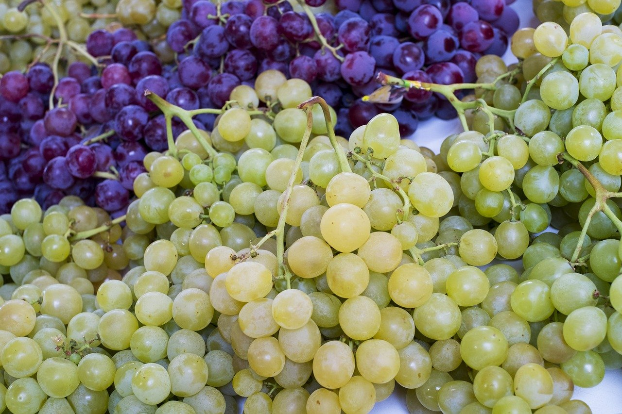 FREE grape Stock Photos from PikWizard