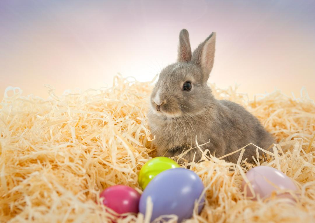 Digital composite of Easter rabbit in front of soft sky